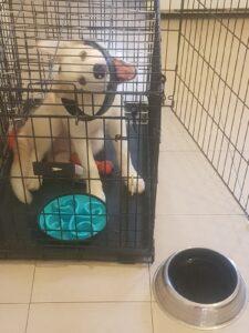 קערת האטה מעניינת כפתרון למקרה שהכלב הפסיק לאכול